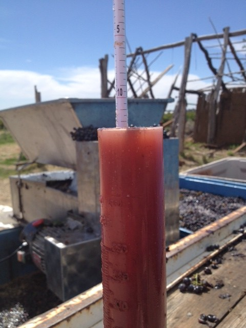 The sugar reading of the 2014 Grenache at crushing. Just what I wanted.